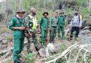 Peduli Akan Pentingnya Fungsi Hutan Ini Yang dilakukan Babinsa Jajaran Kodim 1608/Bima